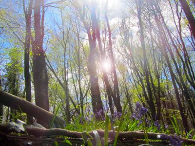Woodland_scenwx400
