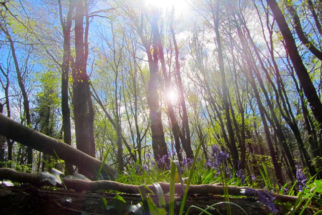 Free Stock Image - Woodland Scene